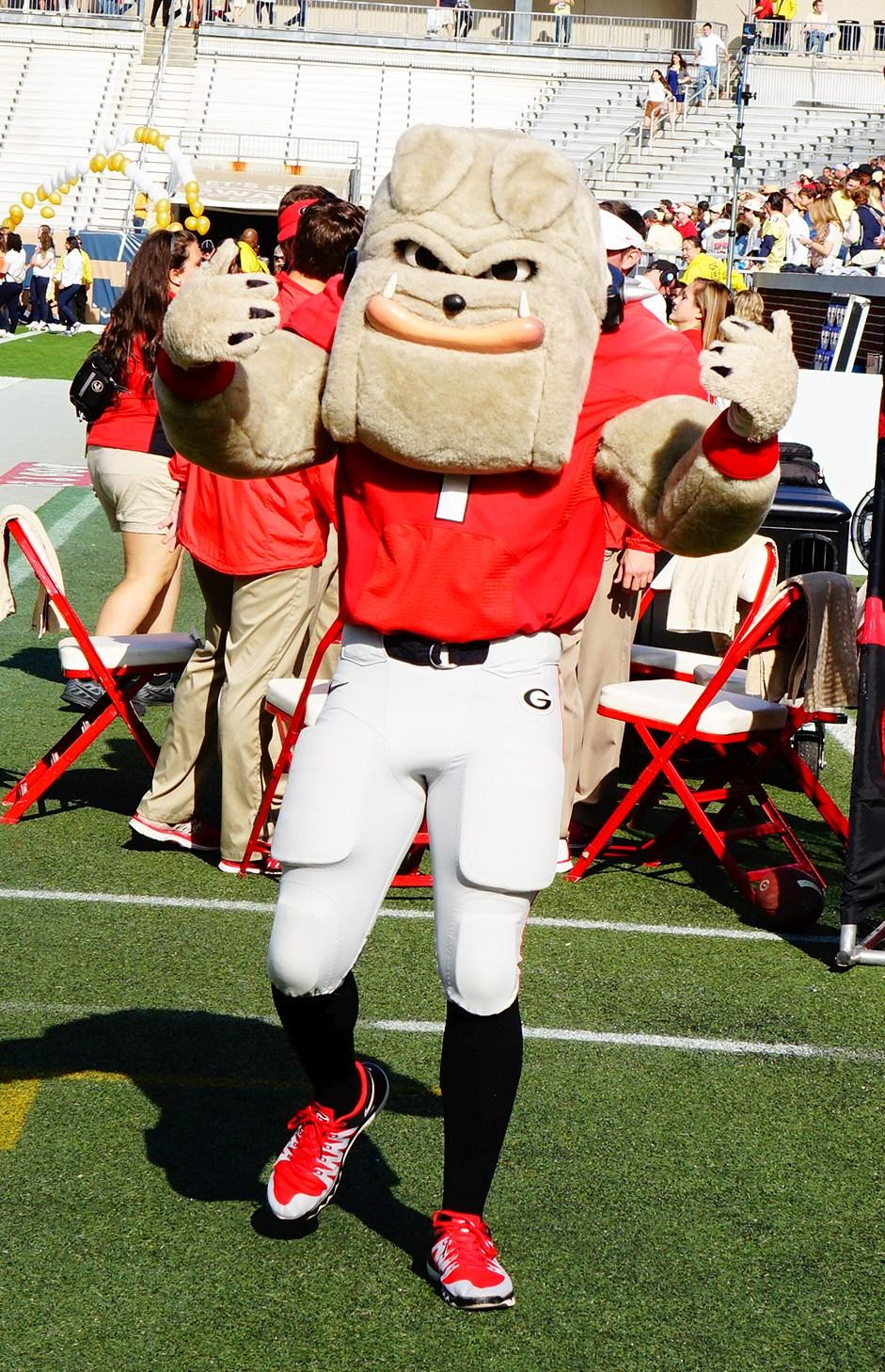 Hairy Dawg is ready to go - Georgia vs. Tech 28-Nov-2015 (Photo by Bulldawg Illustrated's Greg Poole)