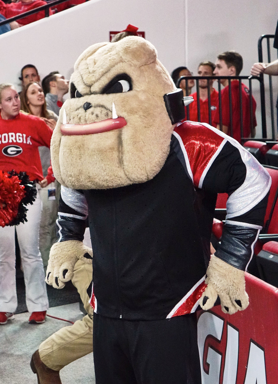 Hairy Dawg at Gymdogs meet vs. Stanford on 18-Jan-2016 (Photo by Greg Poole - Bulldawg Illustrated)