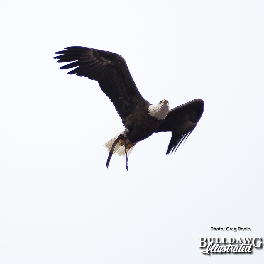 War Eagle VII, Georgia vs. Auburn, Saturday, November 11, 2017